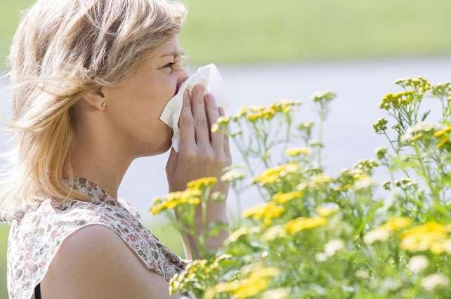 ¿Cómo nos ayuda el reishi a combatir las alergias?