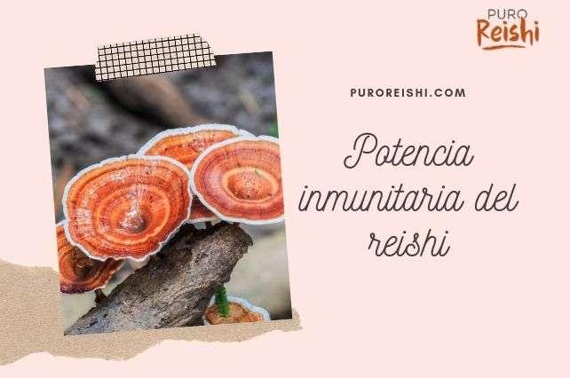 El Reishi y su potencia inmunitaria
