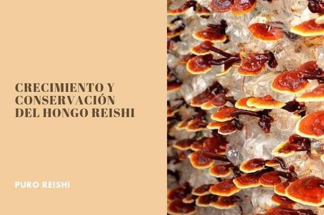 Características de crecimiento y conservación del hongo reishi