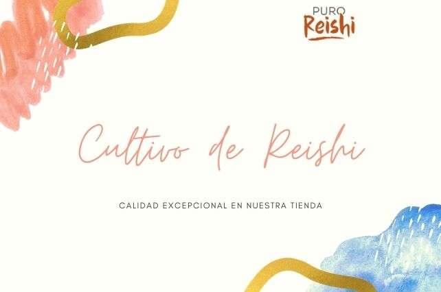 Condiciones de cultivo de Reishi